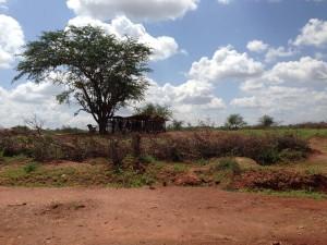 "FLMK Kamwingi Worship Centre - ""under the tree"""
